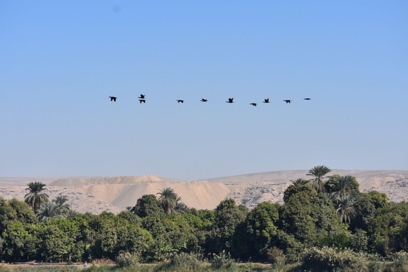 埃及尼罗河风光_图1-22