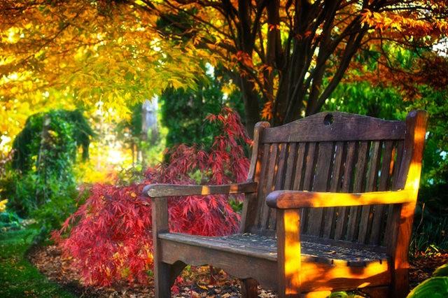 林恩花园---11月的颜色_图1-1