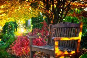 林恩花园---11月的颜色
