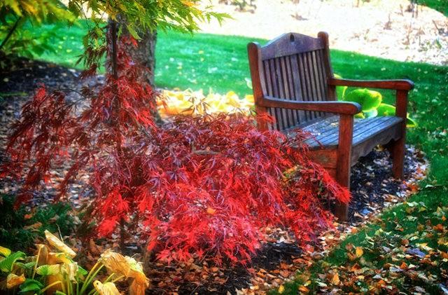 林恩花园---11月的颜色_图1-2
