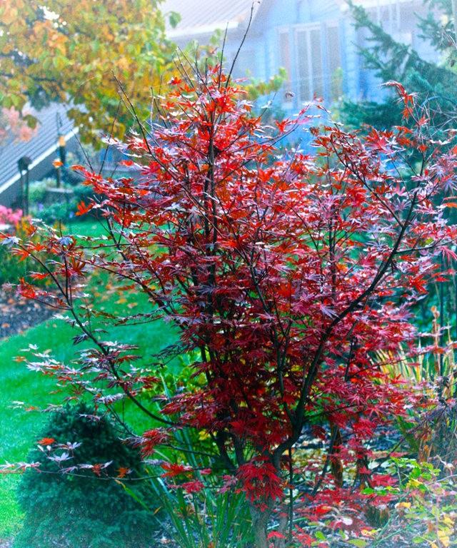林恩花园---11月的颜色_图1-3