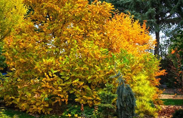 林恩花园---11月的颜色_图1-4