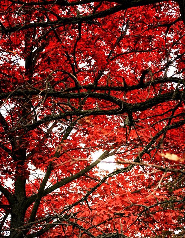 林恩花园---11月的颜色_图1-5