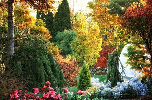 林恩花园---11月的颜色_图1-6