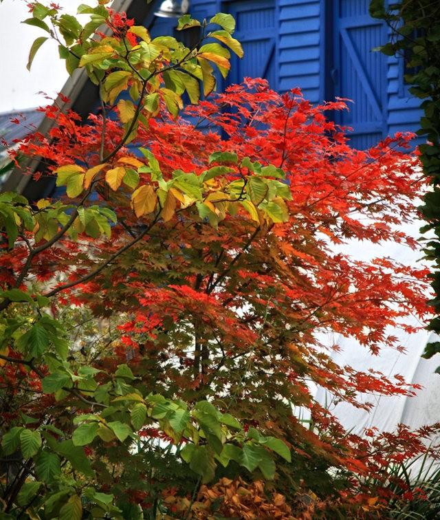 林恩花园---11月的颜色_图1-7