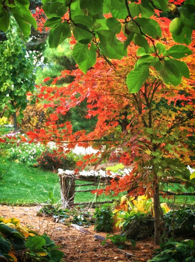 林恩花园---11月的颜色_图1-8