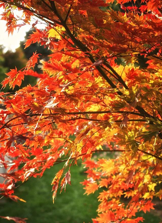 林恩花园---11月的颜色_图1-9