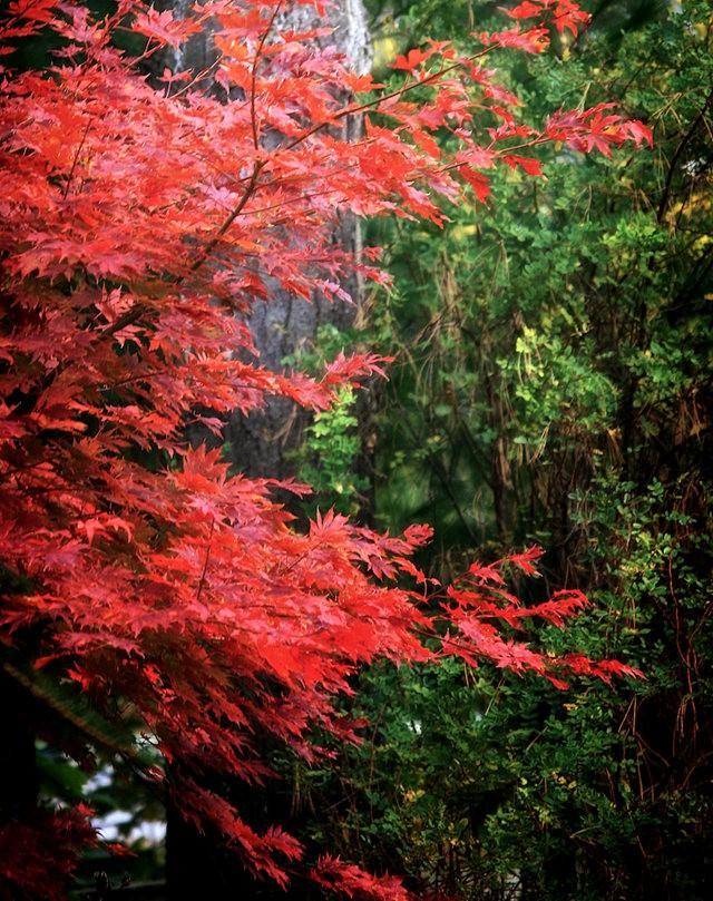 林恩花园---11月的颜色_图1-10