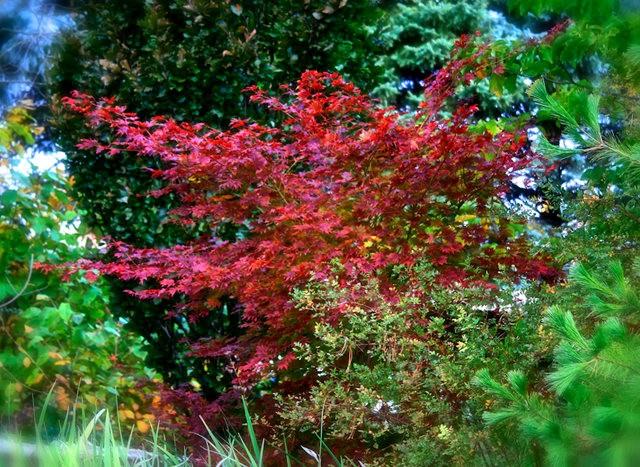 林恩花园---11月的颜色_图1-11