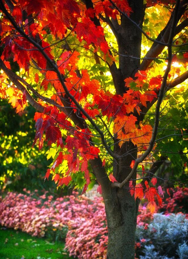 林恩花园---11月的颜色_图1-12
