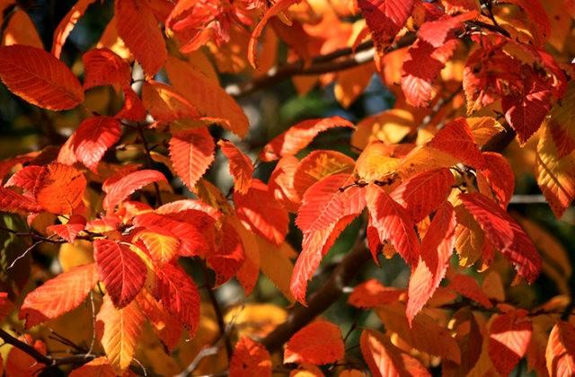 林恩花园---11月的颜色_图1-13