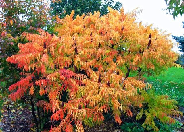 林恩花园---11月的颜色_图1-14