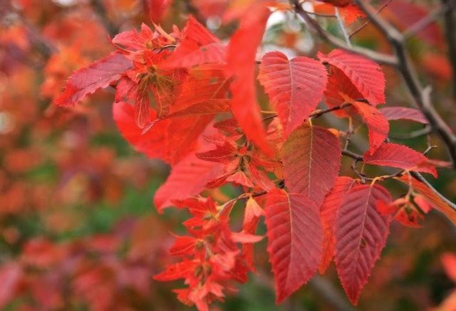 林恩花园---11月的颜色_图1-15