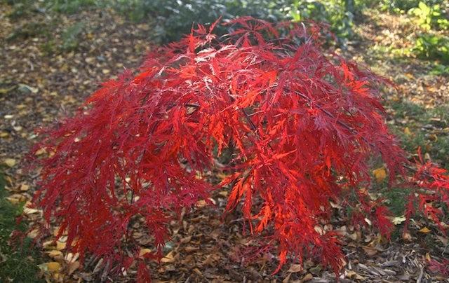 林恩花园---11月的颜色_图1-16