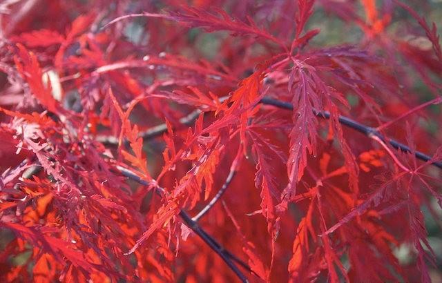 林恩花园---11月的颜色_图1-17