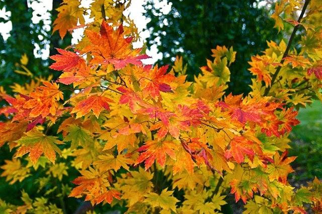 林恩花园---11月的颜色_图1-18