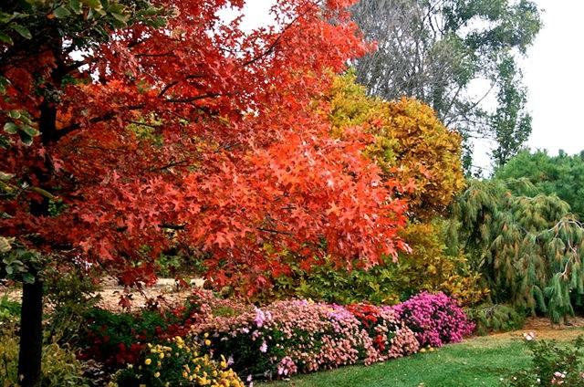 林恩花园---11月的颜色_图1-19