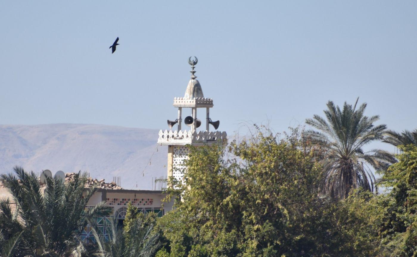 埃及尼罗河风光_图1-48