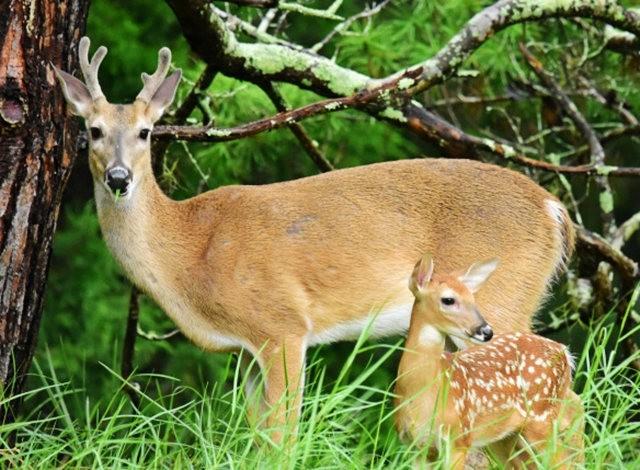 鹿在Chesnut Nature Park_图1-3