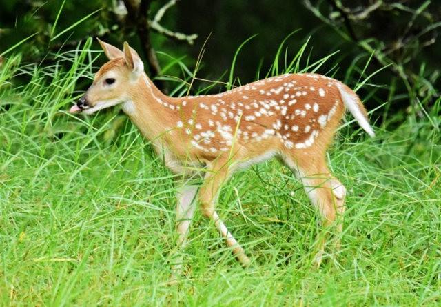 鹿在Chesnut Nature Park_图1-7