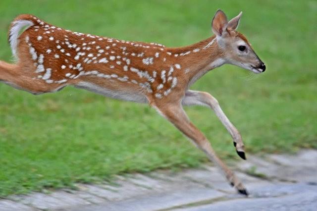 鹿在Chesnut Nature Park_图1-17