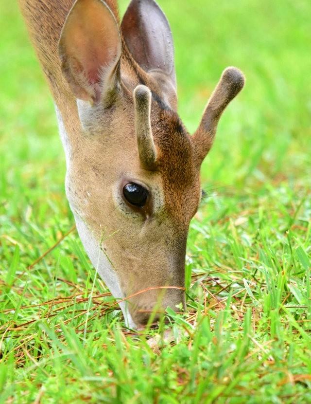 鹿在Chesnut Nature Park_图1-20