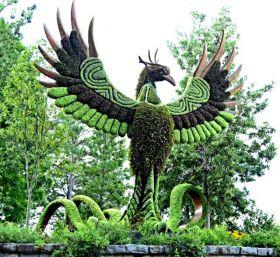 植物园的神奇植物