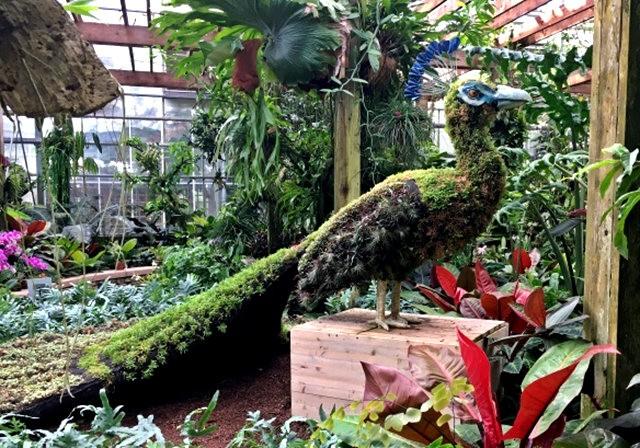植物园的神奇植物_图1-7