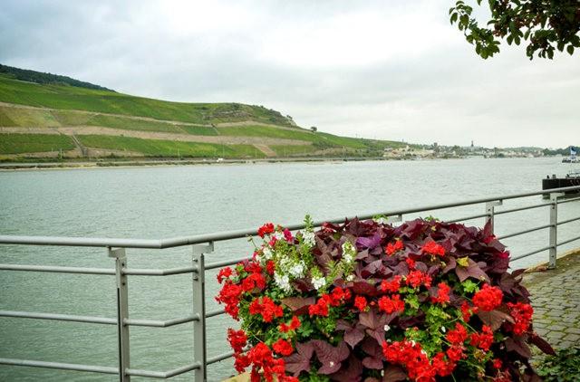 莱茵河中段游_图1-7
