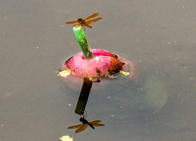 Wakodahatchee Wetlands 濕地_圖1-9