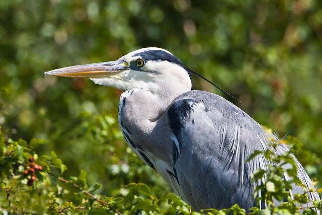 Wakodahatchee Wetlands 濕地_圖1-23