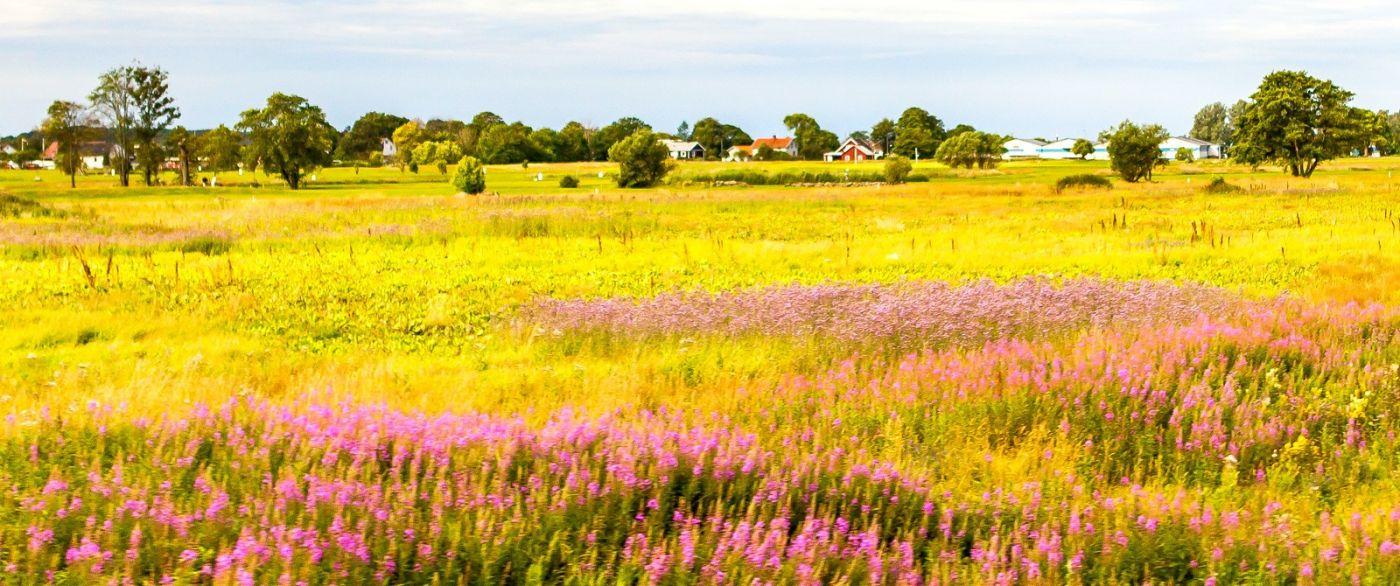 北歐旅途,沿路的漂亮農莊_圖1-17