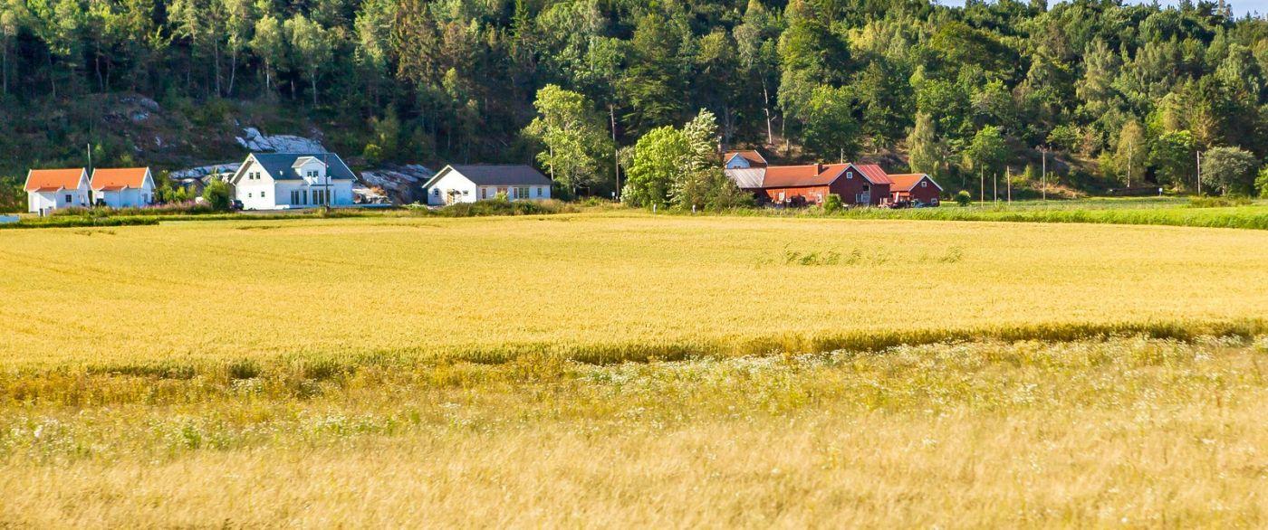 北歐旅途,沿路的漂亮農莊_圖1-21