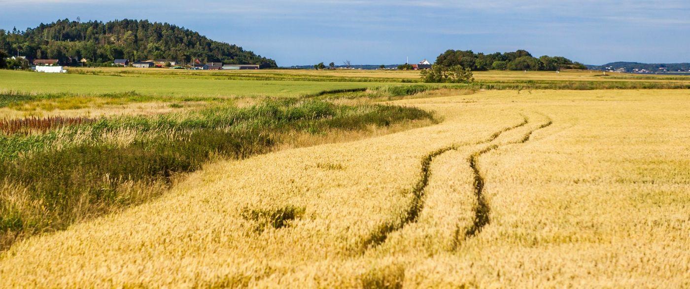 北歐旅途,沿路的漂亮農莊_圖1-23