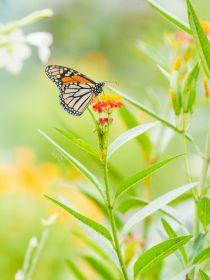 镜头前的彩蝶