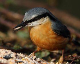 纽波特湿地国家自然保护区--五十雀