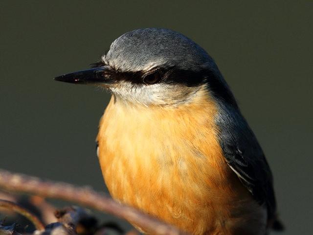 紐波特濕地國家自然保護區--五十雀_圖1-9
