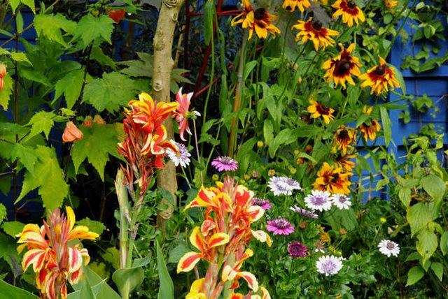 馬爾科姆斯花園---3_圖1-1