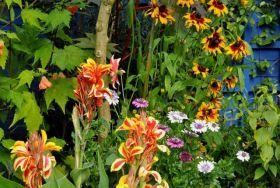 马尔科姆斯花园---3