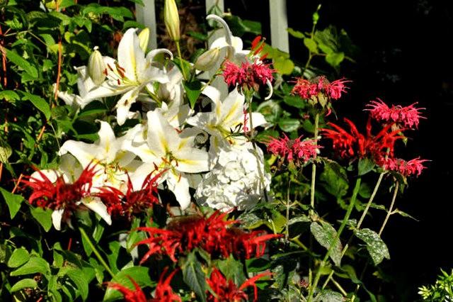 馬爾科姆斯花園---3_圖1-4