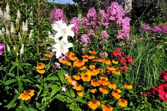 馬爾科姆斯花園---3_圖1-5