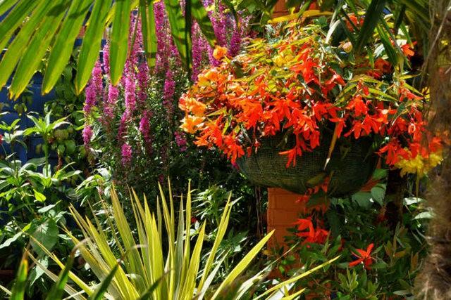 馬爾科姆斯花園---3_圖1-7