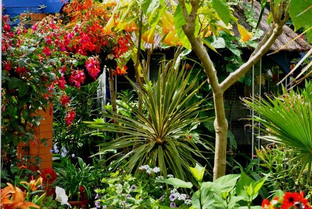 馬爾科姆斯花園---3_圖1-11