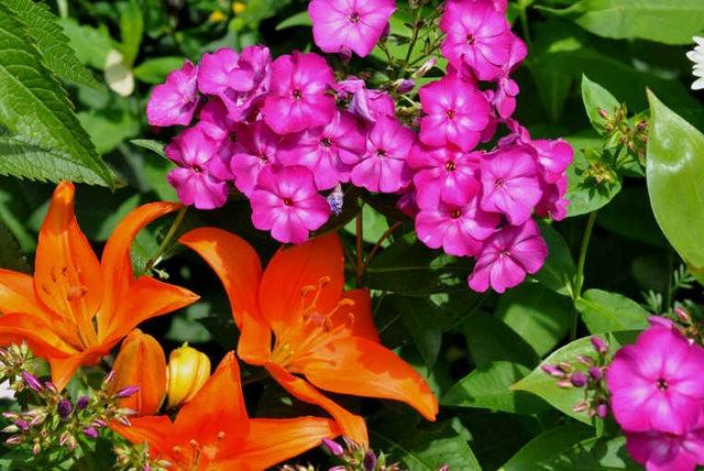 馬爾科姆斯花園---3_圖1-13