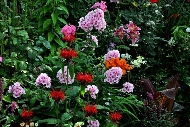 馬爾科姆斯花園---3_圖1-16