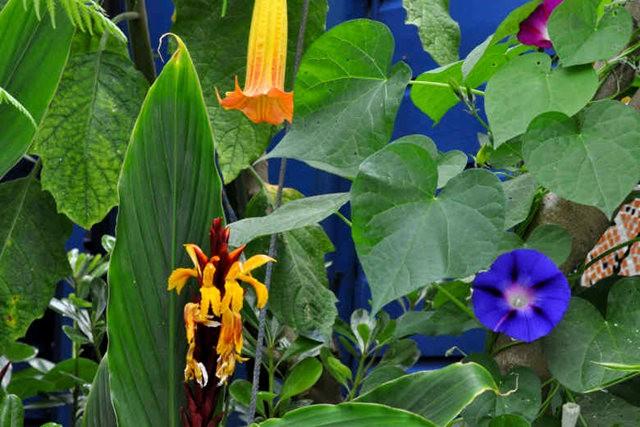 馬爾科姆斯花園---3_圖1-17