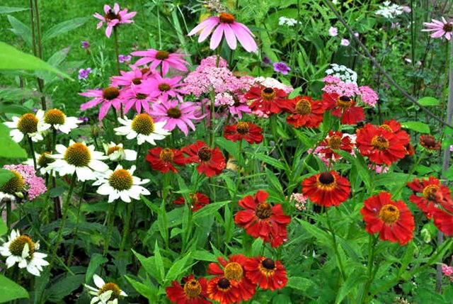 馬爾科姆斯花園---3_圖1-19