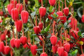林恩花园--英国格洛斯特郡花园