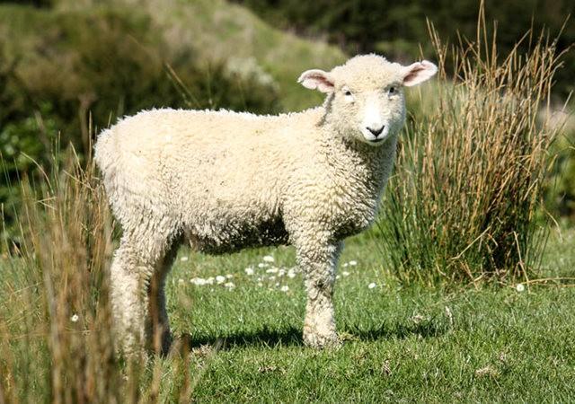 莎士比亞公園之小羊羔_圖1-6