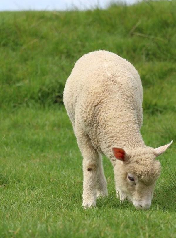 莎士比亞公園之小羊羔_圖1-10